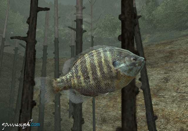 Reel Fishing 3  Archiv - Screenshots - Bild 3